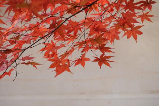 00Kyoto_201111_n255.jpg