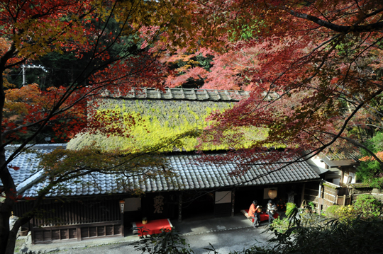 03Kyoto_201111_n137.jpg