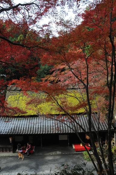 04Kyoto_201111_n107.jpg