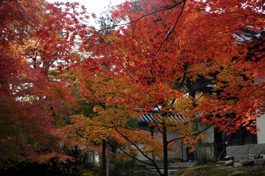 04Kyoto_201111_n249.jpg
