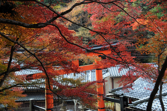 05Kyoto_201111_n118.jpg