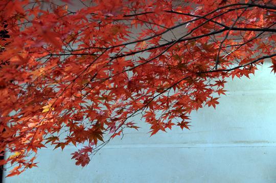 05Kyoto_201111_n252.jpg