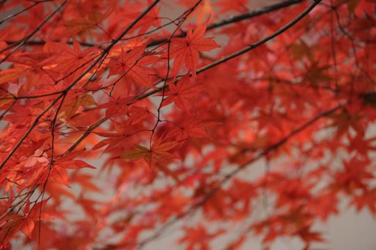 06Kyoto_201111_n262.jpg