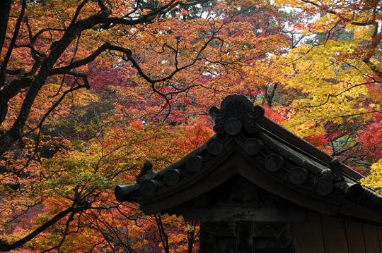 08Kyoto_201111_n274.jpg