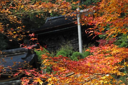 Kyoto_201111_n030b.jpg
