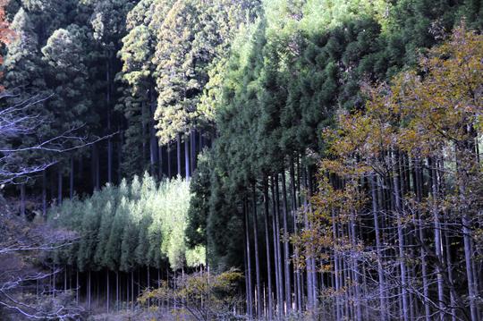 Kyoto_201111_n073.jpg