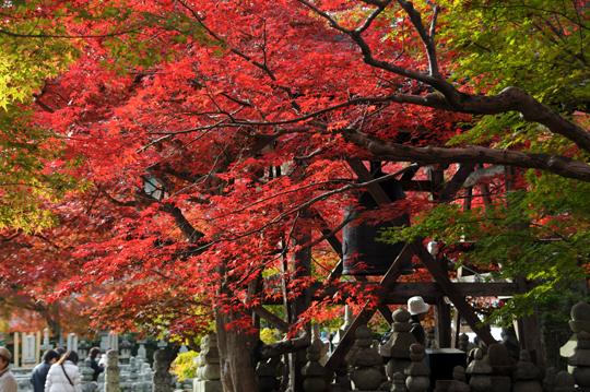k01Kyoto_201111_n209.jpg