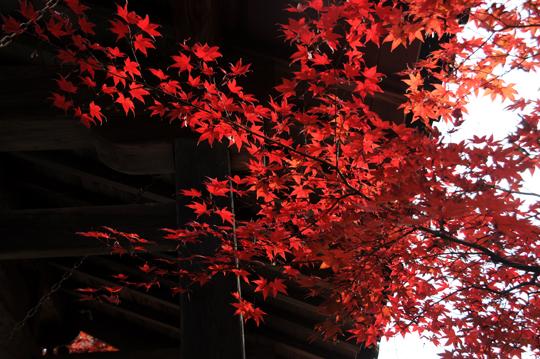 k03Kyoto_201111_n195.jpg
