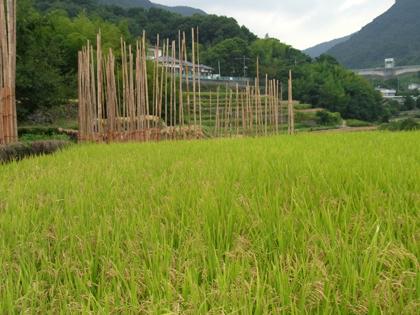 kagawa_201009_r221.jpg