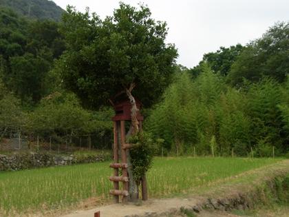 kagawa_201009_r244.jpg