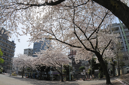 kameari_120410_n7.jpg