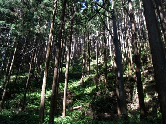 okumusashi_120824_13540.jpg